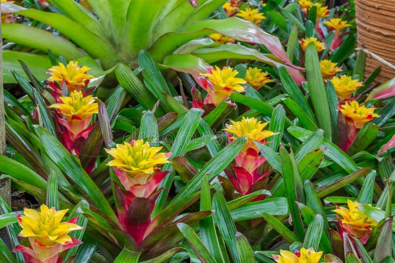 Garden decor styles. Of Nong Nooch Gardens in Pattaya,Thailand stock photos