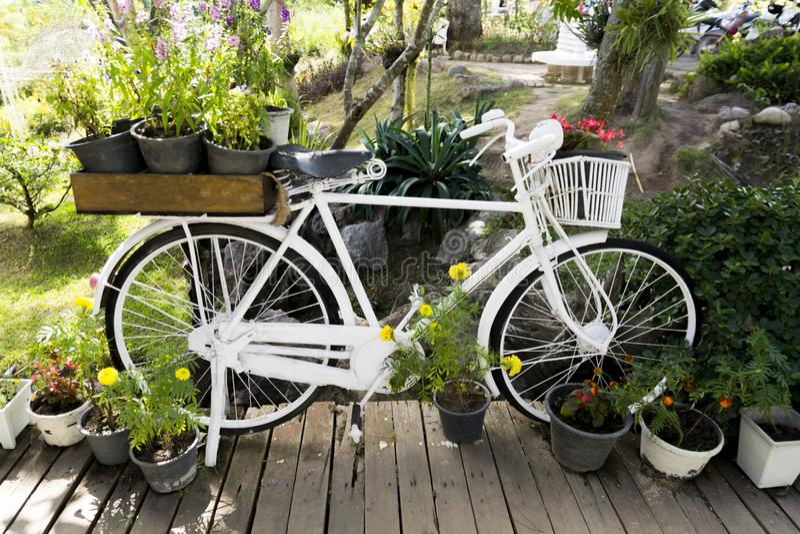 Garden decoration. Using white bike. royalty free stock image