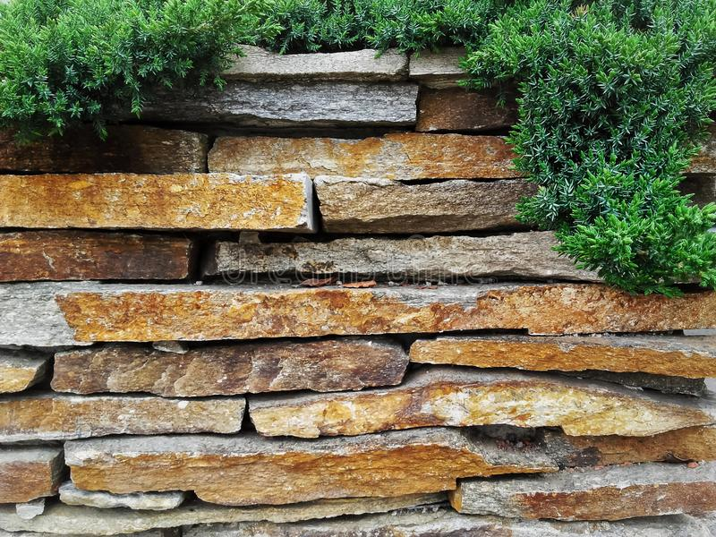 Garden decorative natural stone wall fence  with evergreen tree stock photography