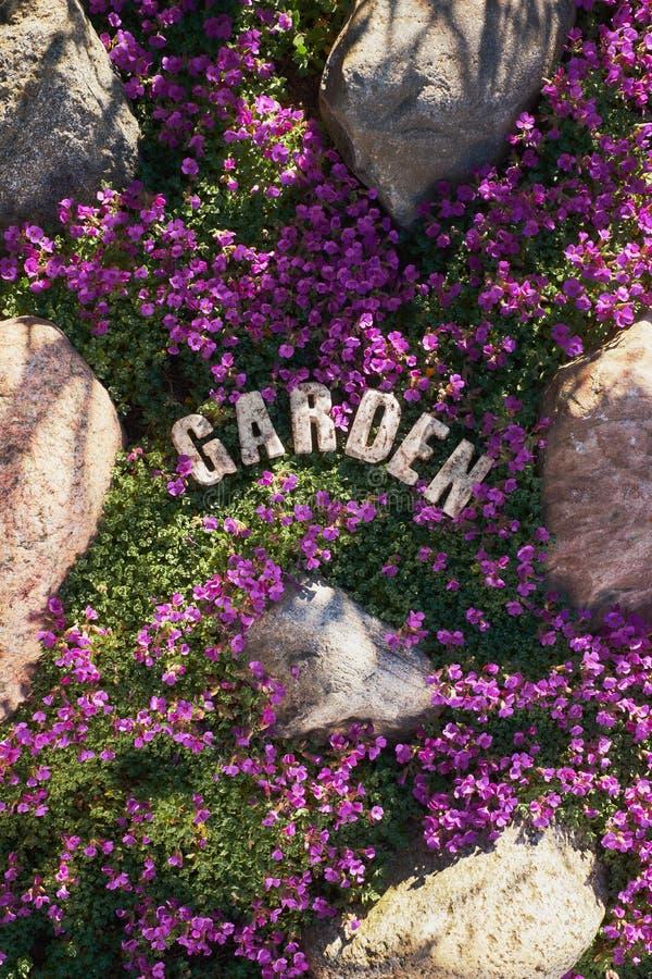 Garden design, a spring carpet of pink-purple flowers stock image