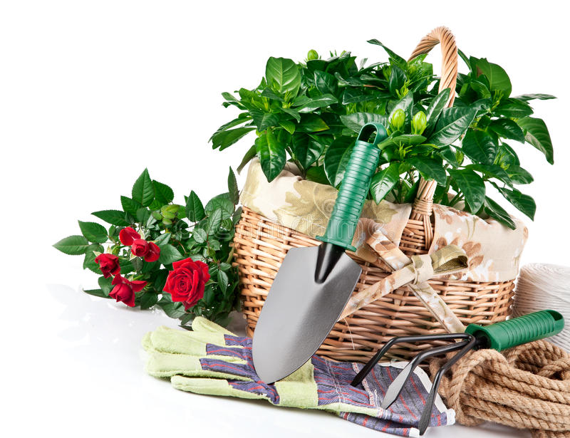 Garden Equipment With Flowers Stock Photo
