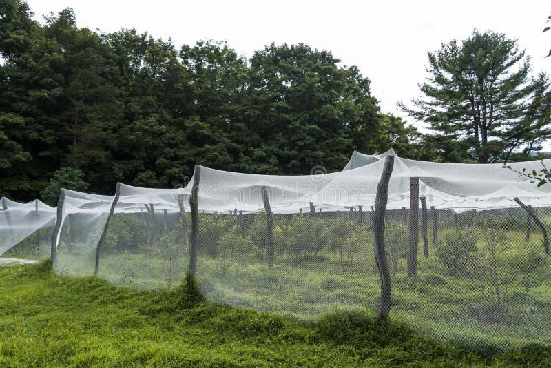 Garden fabric_1. Protective garden fabric draped over tree limbs stock photo