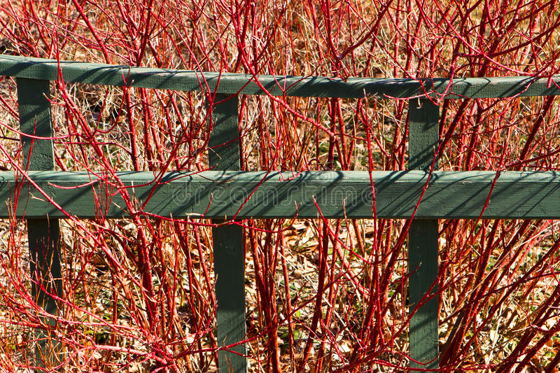 Garden fence and red-twig dogwood royalty free stock photography