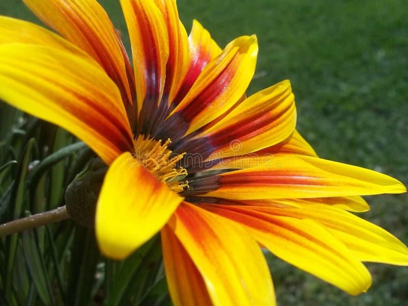 Garden& x27; fiore di s fotografia stock