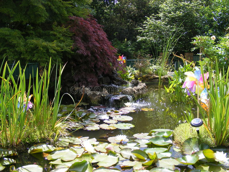 Garden fish pond with pond lilies royalty free stock photo