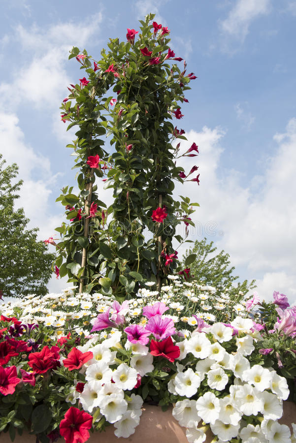 Garden flower arrangement royalty free stock images