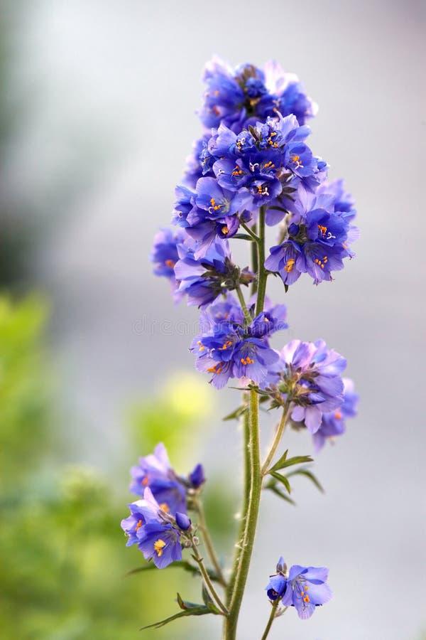 Garden flower stock image
