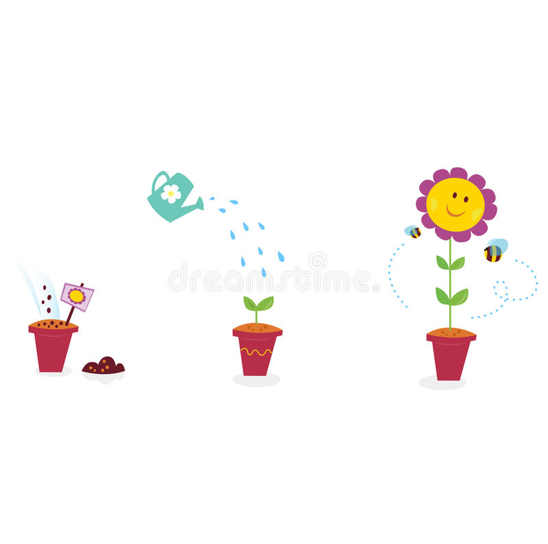 Download Garden Flower Growth Stages - Sunflower Stock Vector - Image: 13605650