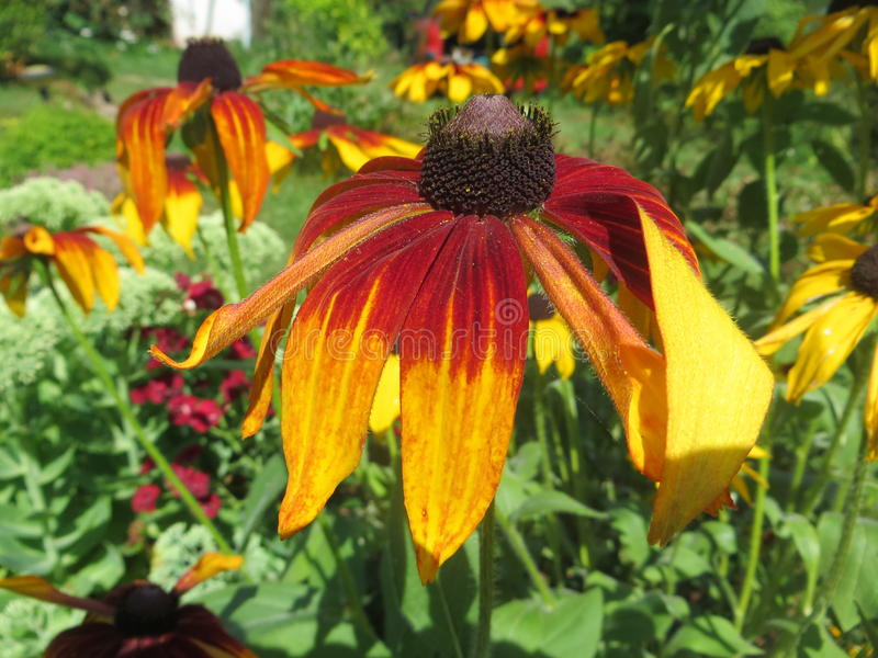 Garden. Flower garden in the summer stock photography