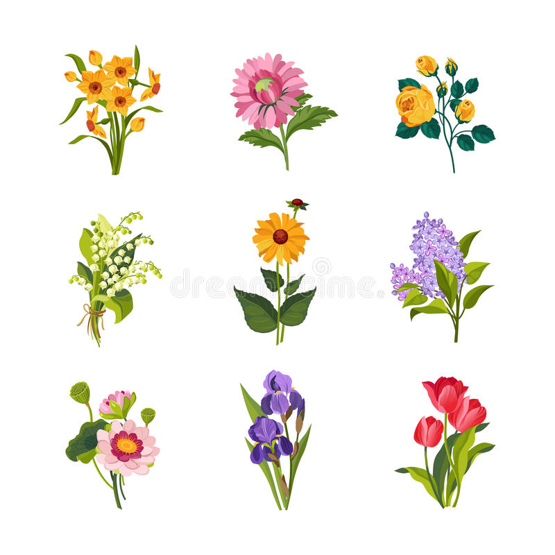 Garden Flowers Collection royalty free illustration
