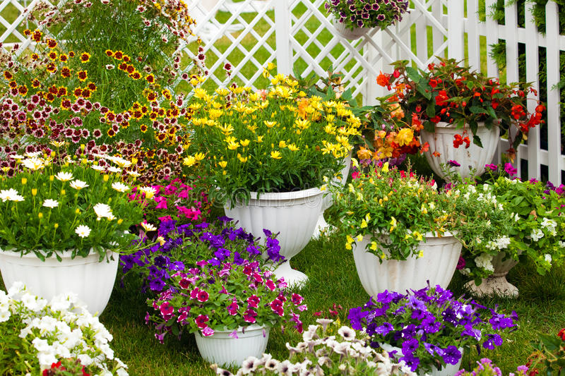 Garden Flowers Of Different Colors In Pots Stock Photo ...