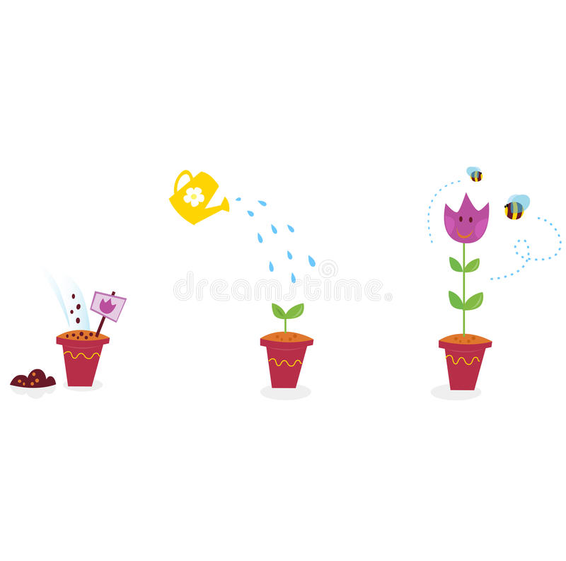 Garden flowers growth stages - tulip royalty free illustration