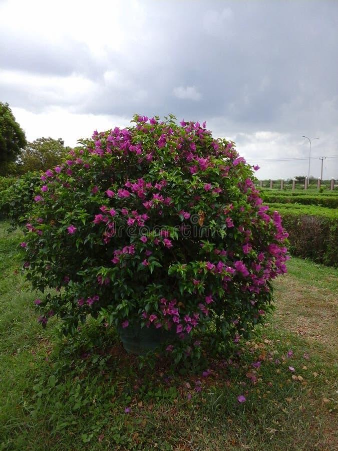 Garden flowers hanban. Green beautifully garden more color full and good nise flowers hanban stock photos