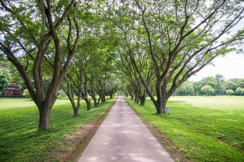 Garden Foot Path Stock Photo