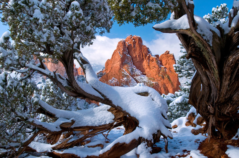 Garden framed by Junipers. South Gateway Rock formation framed by Juniper Trees at the Garden of the Gods Park in Colorado Springs, Colorado with fresh fallen stock photo