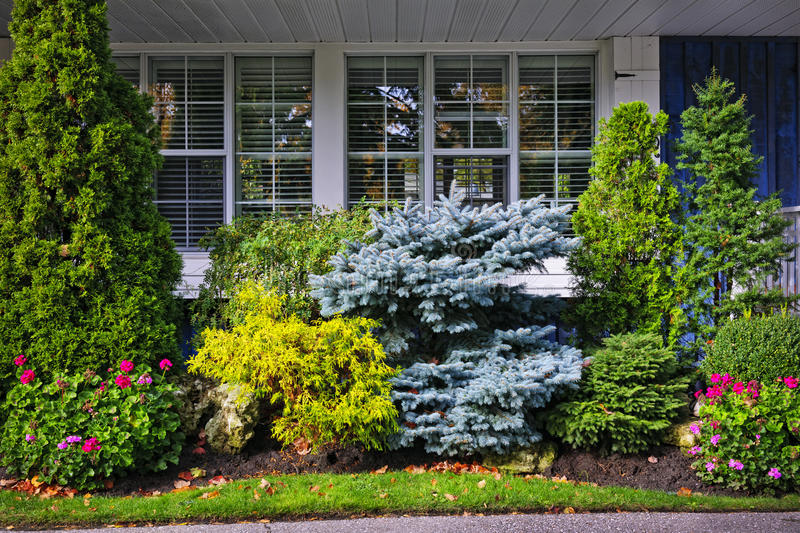 Garden in front of house. Beautiful garden with trees and flowers in front of windows at home royalty free stock images
