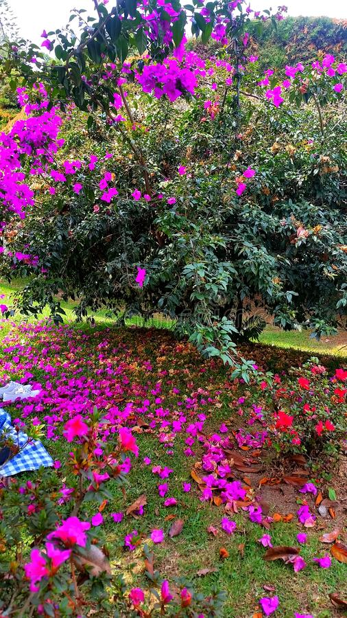 Garden full of colors. Guarne colombia view stock photography