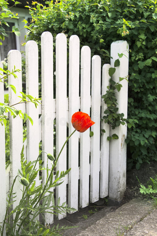 Free Garden Gate And Poppy Stock Image - 32261281
