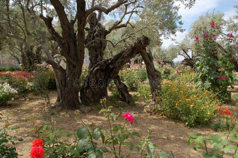 Garden Of Gethsemane Stock Photo Image Of Bible Jesus 22254518