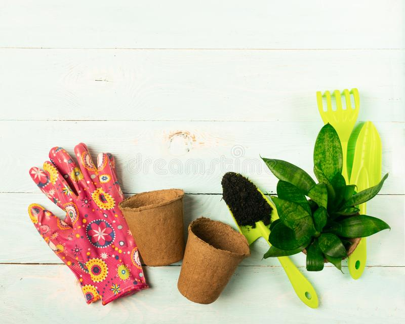 Garden gloves shovel plants in pots blue wooden background. Spring concept. Work with flowers in the garden and home. Garden gloves shovel plants in pots on a royalty free stock photos