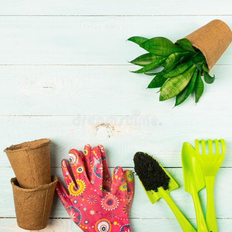 Garden gloves shovel plants in pots blue wooden background. Spring concept. Work with flowers in the garden and home. Garden gloves shovel plants in pots on a stock photography
