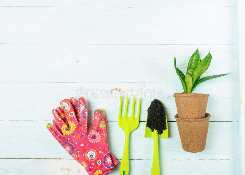 Garden gloves shovel plants in pots blue wooden background. Spring concept. Work with flowers in the garden and home. Garden gloves shovel plants in pots on a royalty free stock images