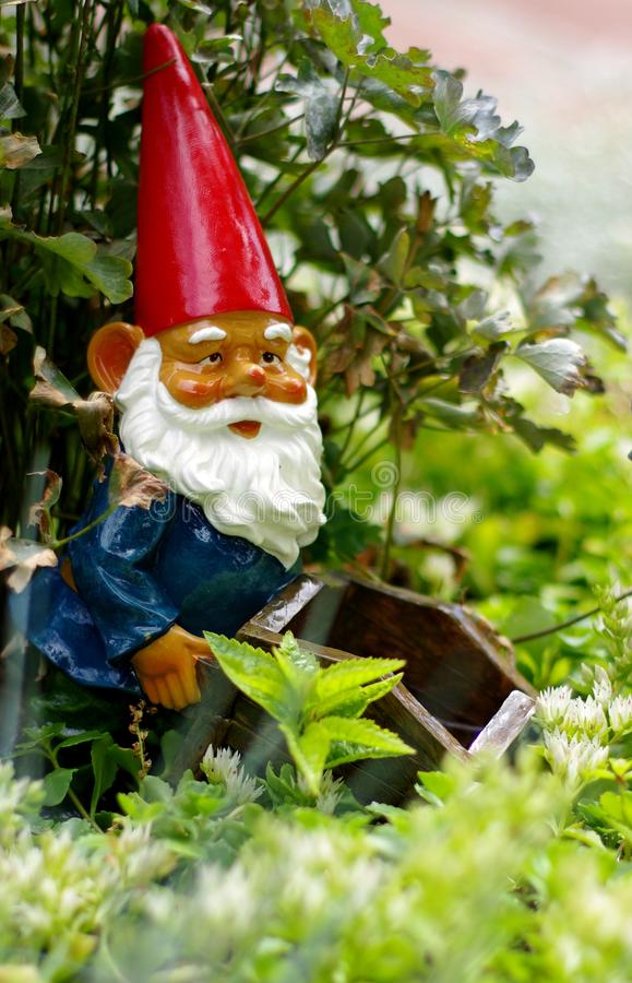 Download Garden Gnome Royalty Free Stock Image - Image: 23301876