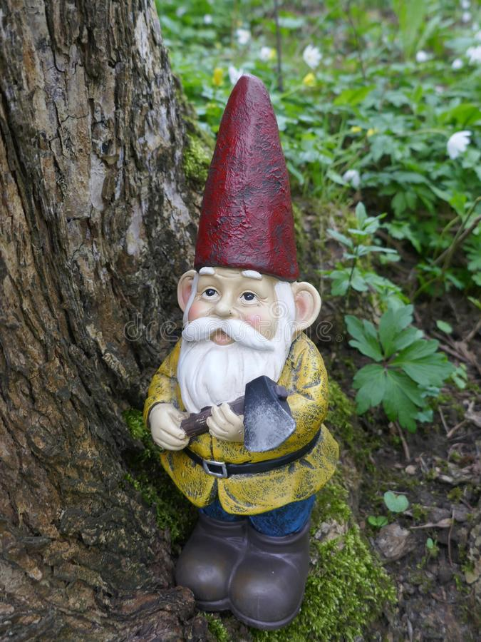 Garden Gnome in the forest stock images