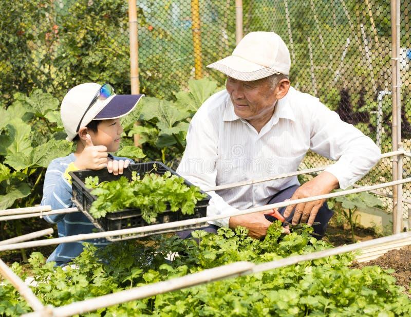 garden grandfather grandson working στοκ εικόνες