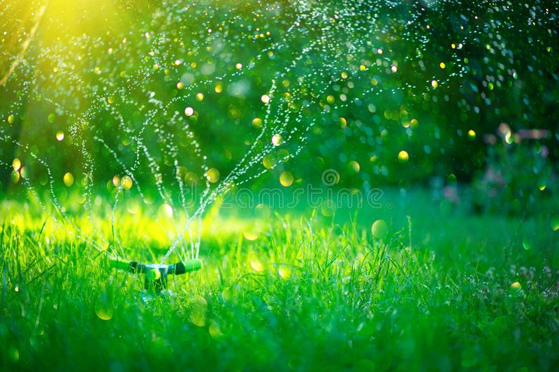 Garden, Grass Watering. Smart garden activated with full automatic sprinkler irrigation system working in a park, watering lawn stock photos