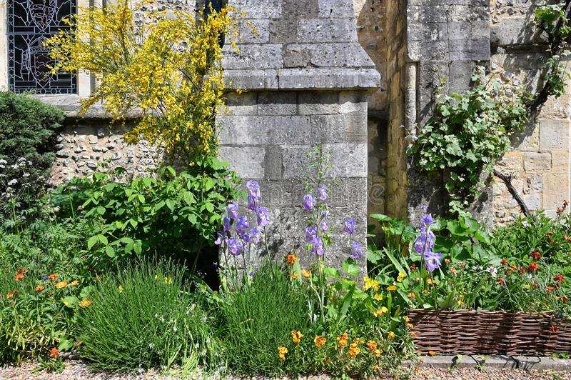 Garden at the Great Hall in Winchester. Iris and wallflowers and broom bloom in the small garden outside the Great Hall in Winchester, Hampshire, England royalty free stock photography