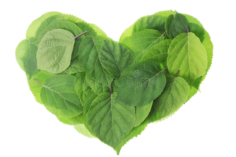 Download Garden green leaves heart stock image. Image of symbol - 25747935
