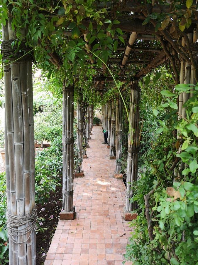Garden green silent way royalty free stock photos