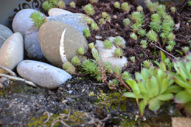Garden ground stock images
