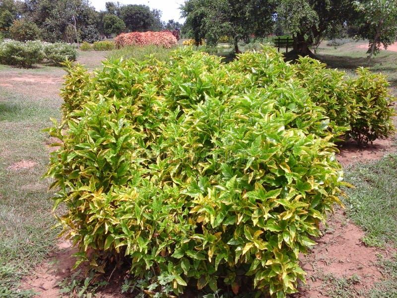 Garden ham ten. Green beautifully garden more color full and good wether ham ten royalty free stock photography