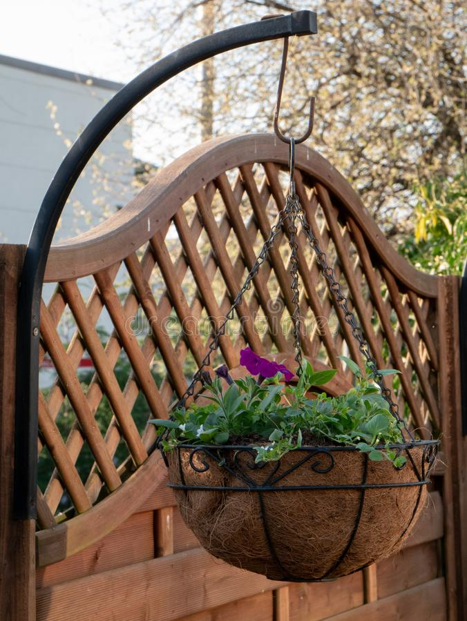 Garden hanging basket in front of fence royalty free stock photography