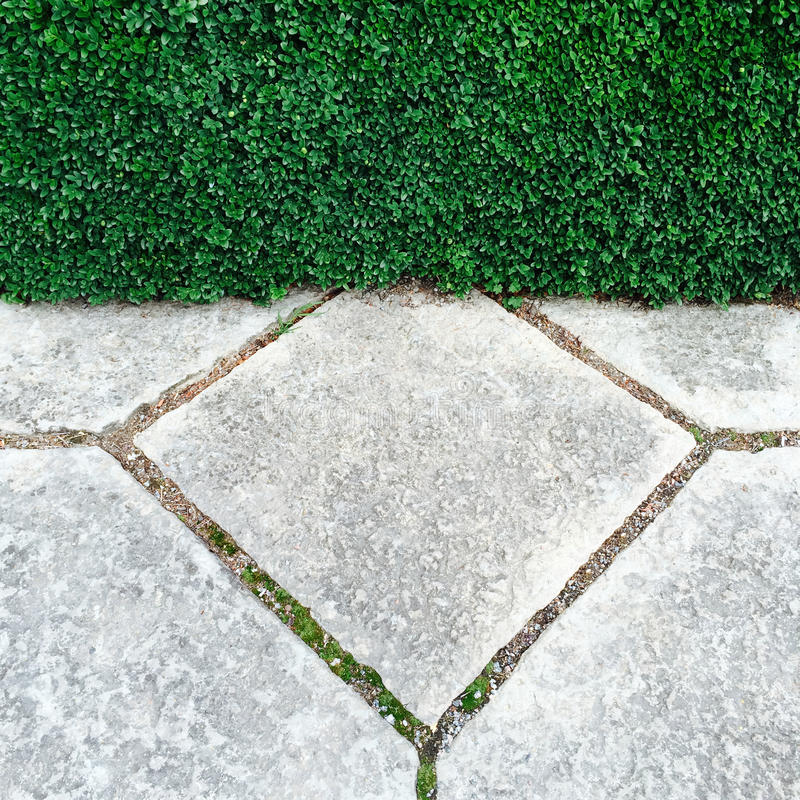 Garden hedge and stone tiles royalty free stock photography