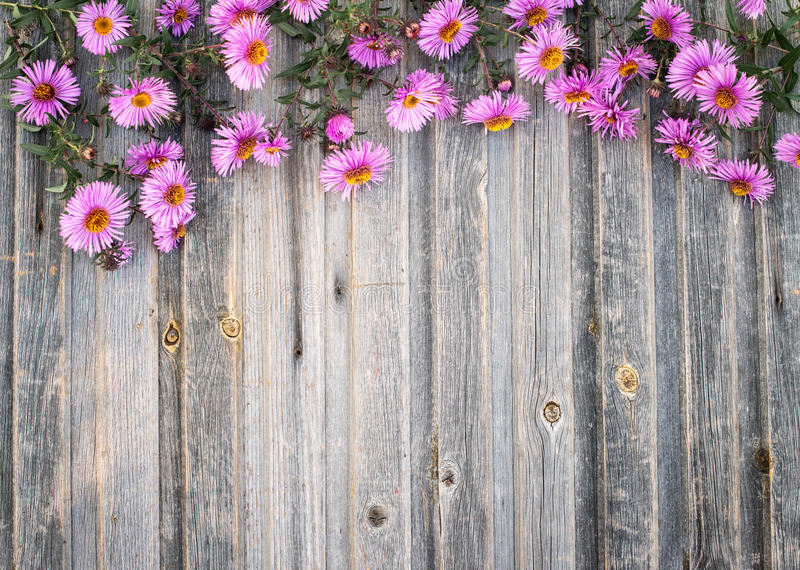 Garden hrysanthemum on rustic wooden background. Retro styled fl. Oral background. Chrysanthemum vintage background royalty free stock images