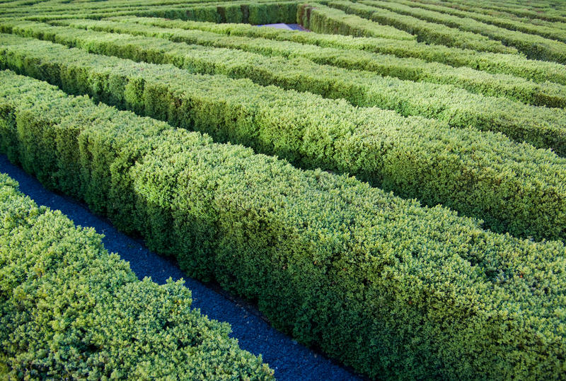 Download Garden  Labyrinth Stock Images - Image: 13228524
