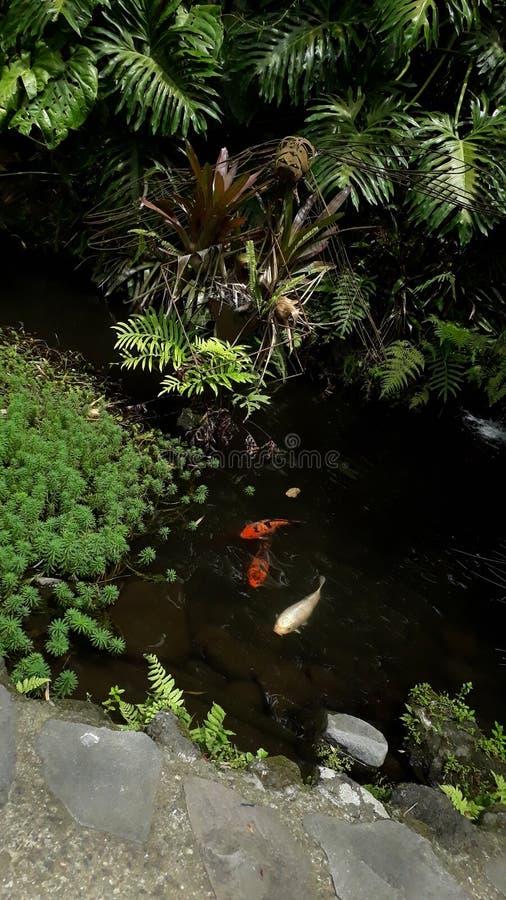 Garden Lankester1 royalty free stock images