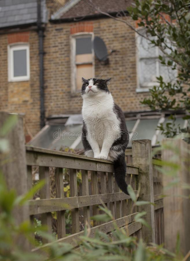 A garden in London, England, the UK - a white and black fluffy cat sniffing the air. stock photos