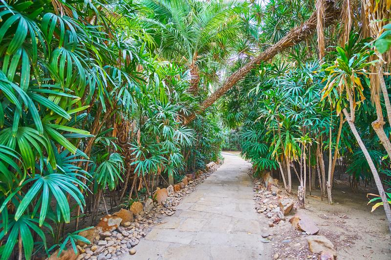 The garden of Manial Palace, Cairo, Egypt. The narrow footpath among the lush green palms of Manial Palace English garden, Cairo, Egypt stock image