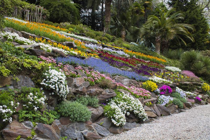 Garden of many colored flowers stock photo