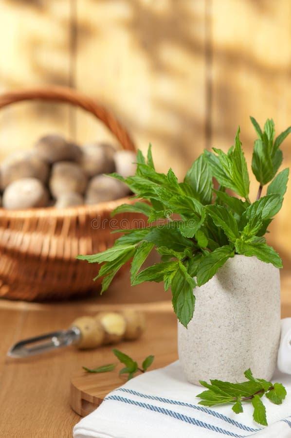 Garden Mint stock photography