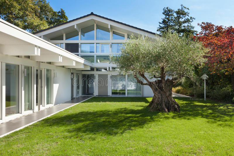 Garden of a modern house with olive tree royalty free stock image