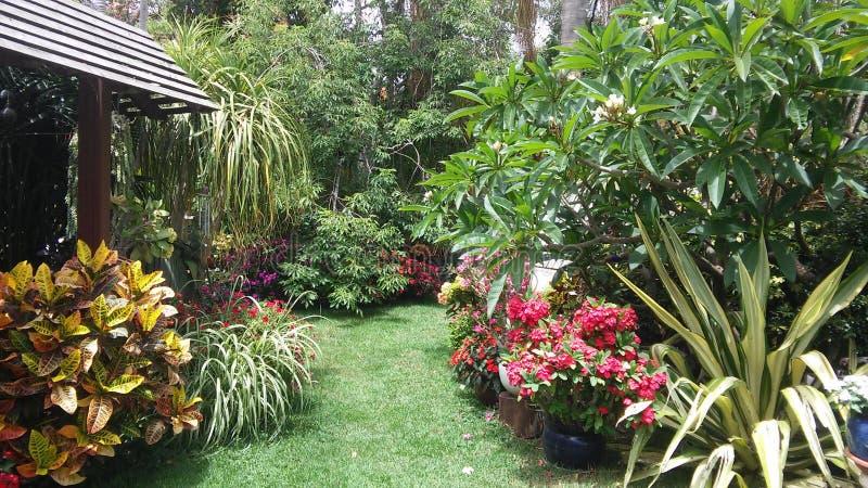 Garden. My garden is amazing stock images