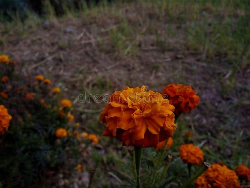 garden!! royalty free stock image