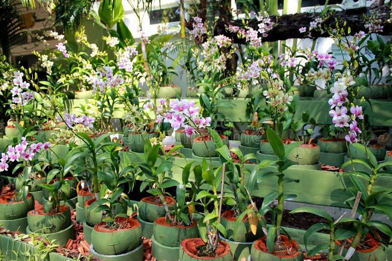 Garden orchid flower stock photo