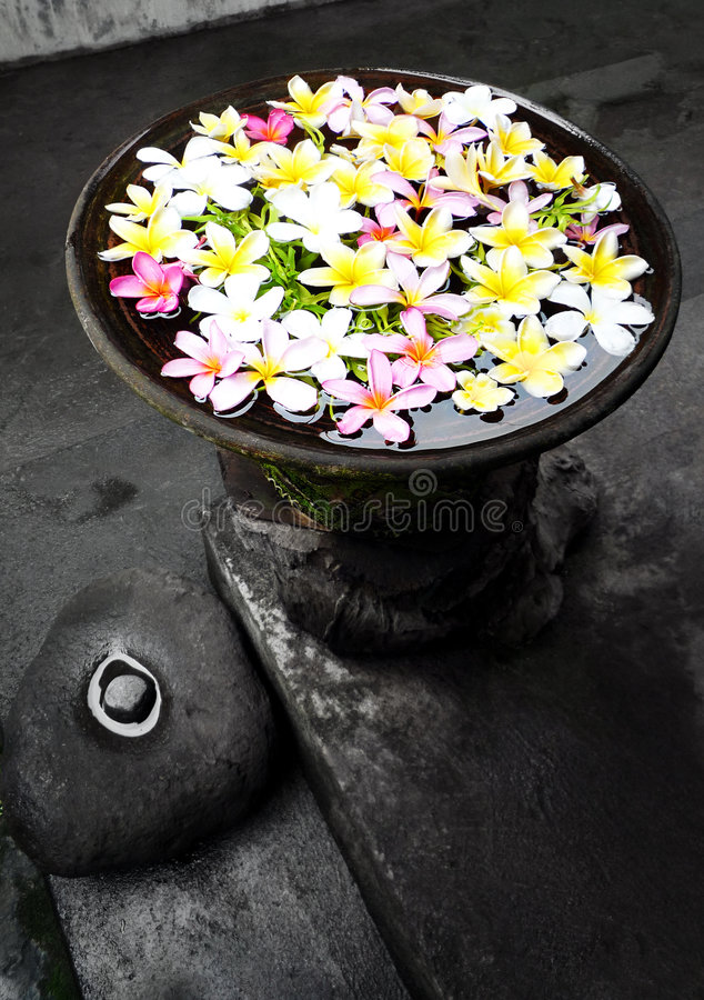 Garden ornament with flowers, Bali. An image of a pretty garden decor piece, a pottery container filled with water and colorful tropical flowers, Plumeria. Taken stock photo