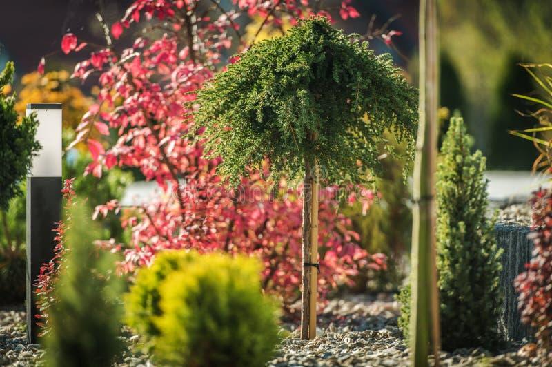 Garden Ornamental Trees royalty free stock photography